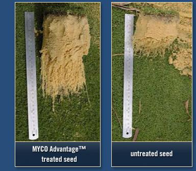 myco_compare treated seed