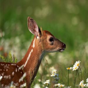 Love Deer & Rabbits But Not In The Garden