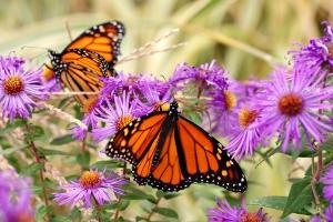Create a Butterfly Garden