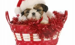 Tips and Tricks for that New Christmas Puppy